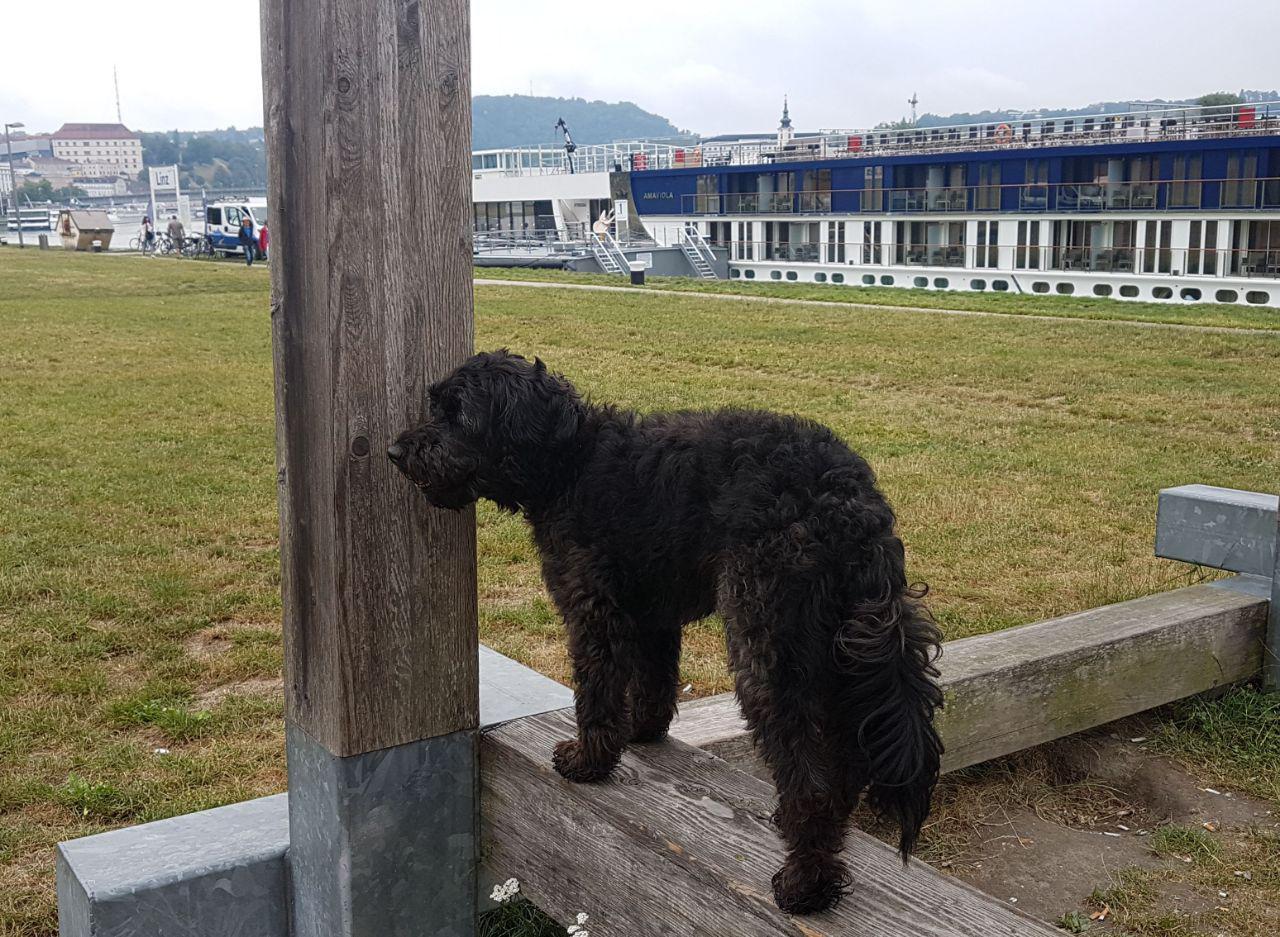 Как перевезти собаку через границу Евросоюза. Часть первая