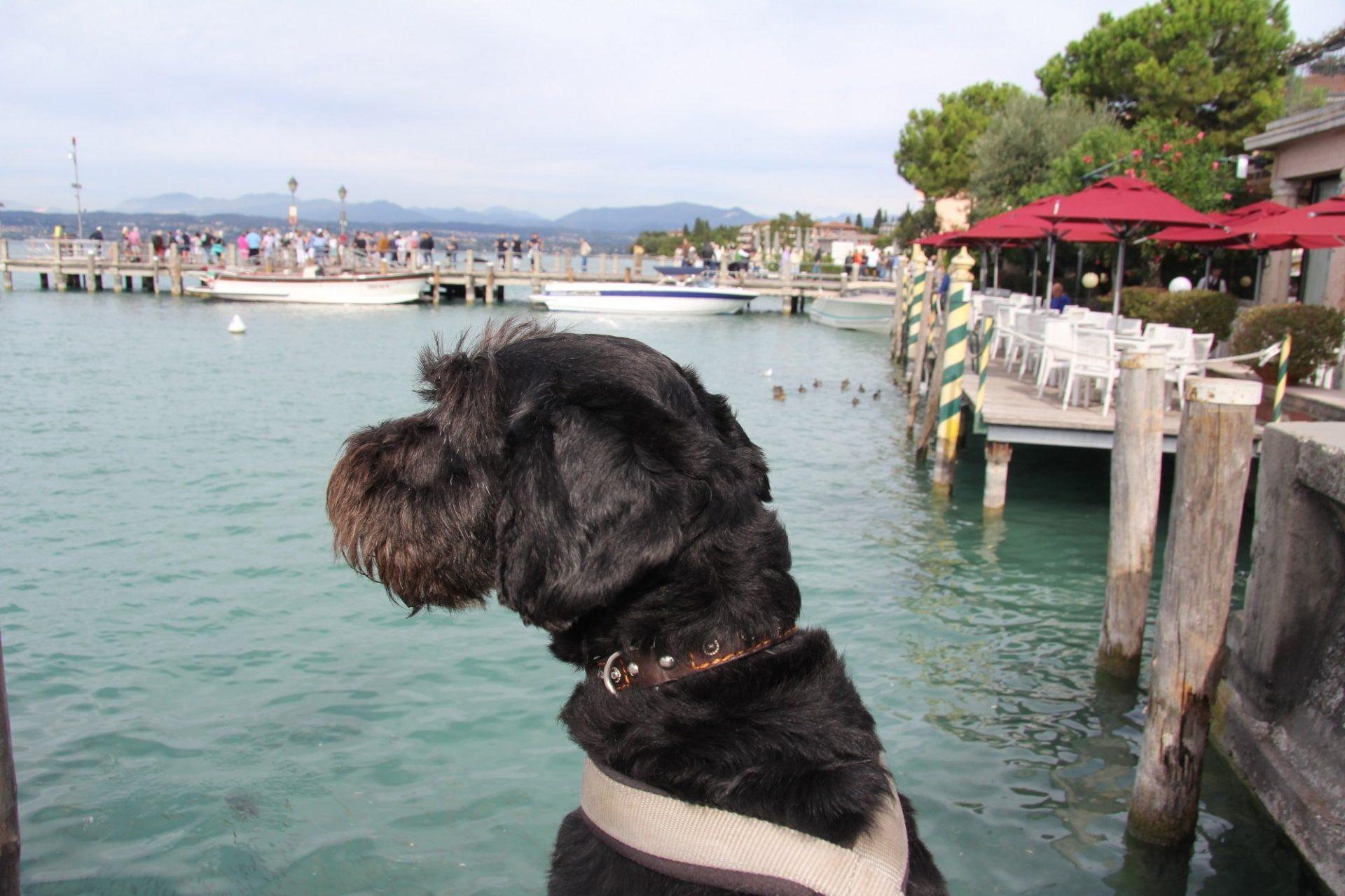 Собственный опыт путешествия с собакой по странам Европы